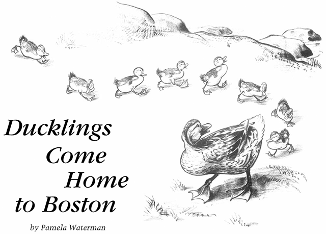 Duckling Comes Home to Boston. By Pamela Waterman
